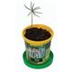 """Набор для выращивания растений ВЫРАСТИ ДЕРЕВО! """"Кедр Сибирский"""" (банка, грунт, семена), zk-001"""