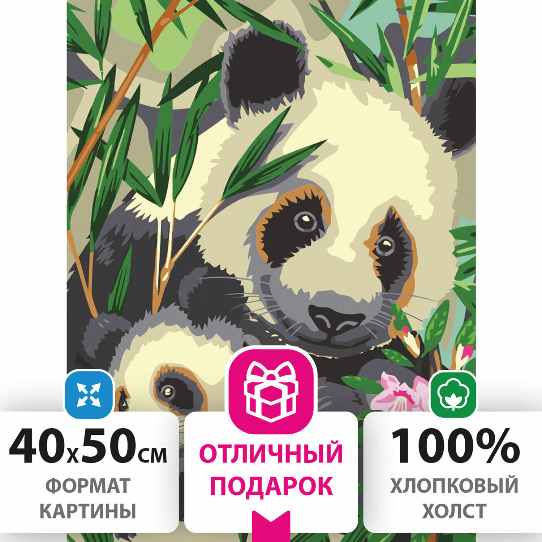 """Картина по номерам 40х50 см, ОСТРОВ СОКРОВИЩ """"Панды"""", на подрамнике, акриловые краски, 3 кисти, 662471"""