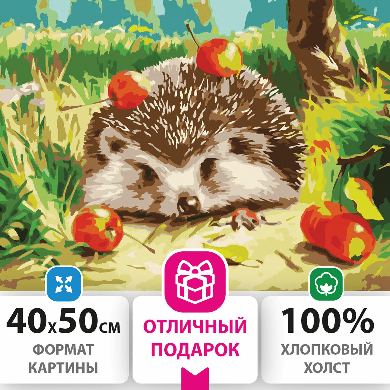 """Картина по номерам 40х50 см, ОСТРОВ СОКРОВИЩ """"Ежик"""", на подрамнике, акриловые краски, 3 кисти, 662490"""